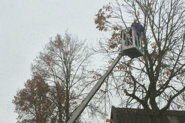 Baumfällungen - Baumpflege