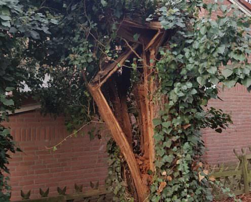 Sturmschaden einer Pappel in Hannover