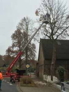 Baumfällung & Baumpflege | Staats GaLaBau in Uetze