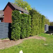 Neubepflanzung in Wathlingen | Staats GaLaBau in Uetze