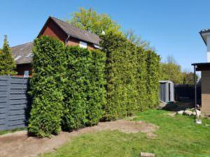 Neubepflanzung, damit der Garten schöner wird