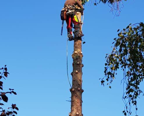 Baumfäller im Einsatz
