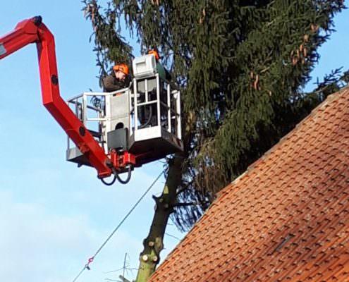 Baumfällung einer 22 Meter Hohen Tanne von einen Sturmschaden