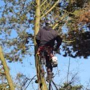 Baumfällung Baumpflege in 29223 Celle
