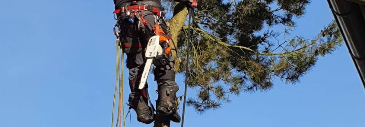 Baumfällung mit Klettertechnik